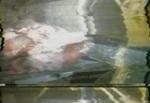 Slaughterhouse_000147